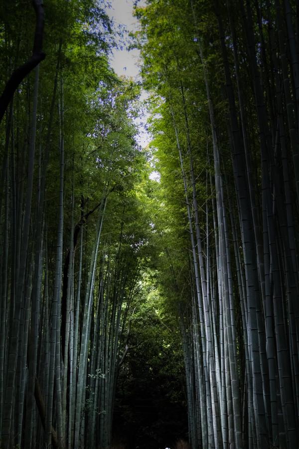 Forbidden Bamboo